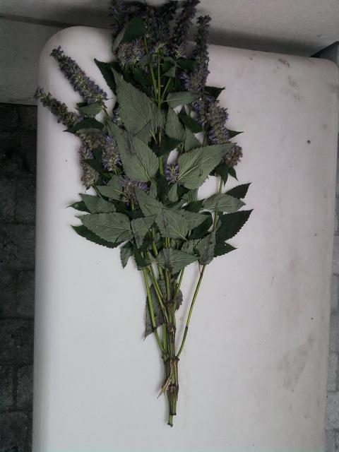 Foto1640